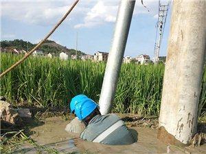 电杆下的泥水里突然冒出个人