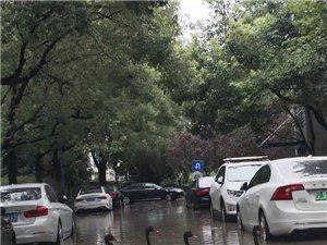 上海台风过后,奥林匹克花园里的黑天鹅跑到路上游泳……