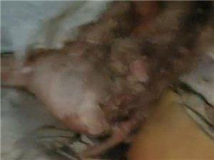 化州男子冒死揭秘:冷库里的冰冻肉恶臭无比,比屎坑还要臭