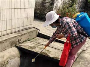湖口县双钟镇:开展病媒生物孳生地治理工作
