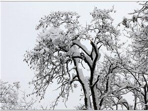 天热,发几张雪景图!