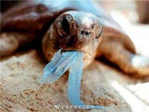 #泰网红海洋动物因塑料死亡#