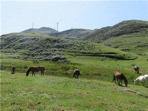 去贵州凉都六盘水,游乌蒙大草原。