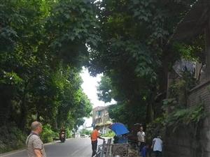 注意了!8月22日,富顺这个地方将实行交通管制