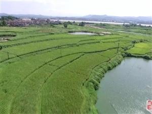 南城县积极创建麻姑米区域公用品牌助农增收