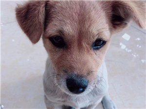 我的小狗被人�У饺照盏木┎┘佑驼九�G了有好心人看到麻�┩ㄖ�我 �x�x