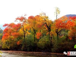 来嵖岈山寻一场最美的秋