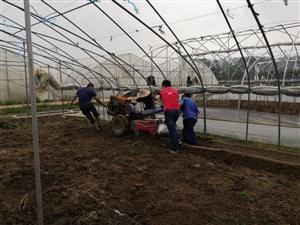 滁州学院赴全椒县调研特色种养农业基地小分队