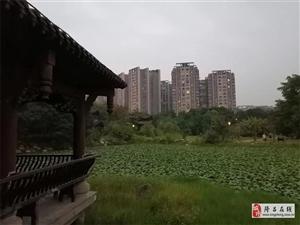 莲峰公园的动与静