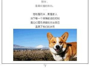 桐城一家宠物医院老店新开,洗澡、护理真划算!