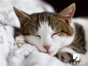 睡�X做�艉眠�是不好?�t�W界�K于�o出了答案~