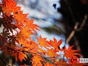 【绿野书院】散文||秋 的 思 念!