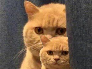 谁的猫不见了?