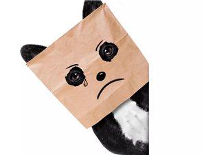 """【健康提示】靠蒸汽眼罩真能拯救""""熊猫眼""""吗?"""
