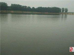 阜城湖的昨天
