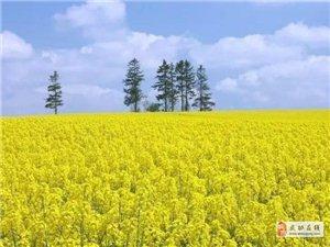 【中华文明】|陕西省(全民阅读.最美三秦)藏头诗大赛(文/李惠敏)