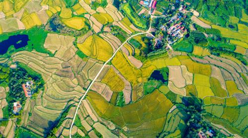 20张照片!潢川农村收稻场景实拍,你回家扛包了吗?
