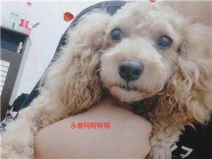 寻狗启事!永春的朋友有谁见到这只狗狗吗?