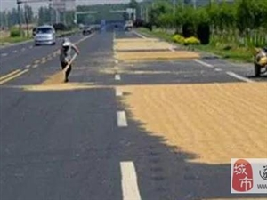 澳门金沙网址站县城市管理局关于禁止在城市道路上打场晒粮的通告