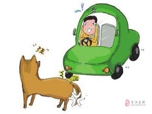 汽车撞了狗狗 责任如何划分