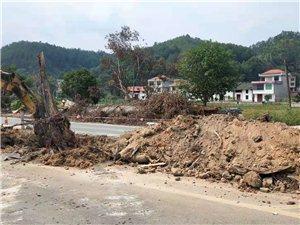 百年古树被撞翻,遂川公路分局及时消除安全隐患
