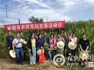 安徽省农业农村厅来我市进行玉米测产