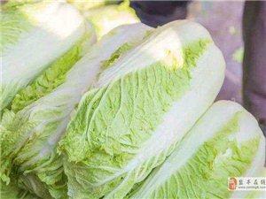 大白菜上密密麻麻的黑点是什么,这还能吃吗