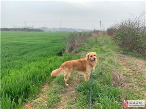 ��物狗意外走失,�大家�兔Γ�提供�索找到狗必有重�x