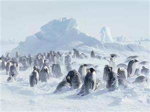 「�S都�O地冰雕展」一生至少一次的冰雪浪漫