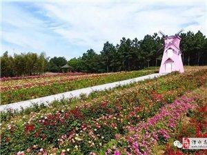 海狮表演!恐龙来袭!巨型卡通风车花海文化节空降南京玫瑰园!
