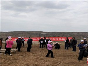 国庆70周年,杨渠村青贮饲料玉米喜获丰收