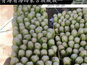 不求点赞求转发!急急急!都兰县柴源村200万斤新鲜芹菜滞销