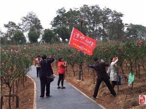 溧水在线网友到石湫玫瑰园去玩拍摄花絮。