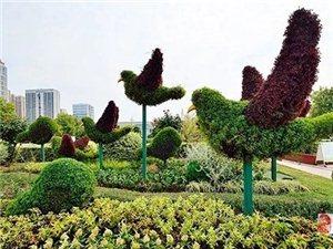 绿树花海扮靓宿城