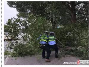 给桐城交警点个赞――国道树木挂断,交警合力清除