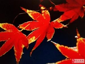 谧静的秋叶