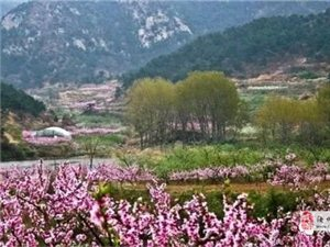 【如�@�r光】桃花谷景�^