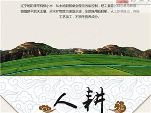中国朝阳杂粮之乡 宣传建平大房身村小米品牌 图片