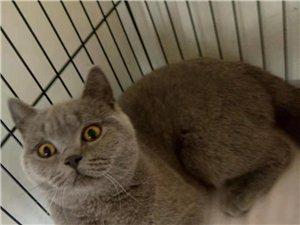 寻猫启事!博兴一网友猫走失,失主心急如焚,紧急寻找!帮转!
