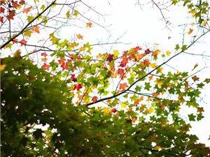 """来到这里终于明白那首歌的寓意""""秋天不回来"""""""