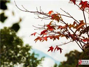 """�淼竭@里�K于明白那首歌的寓意""""秋天不回�怼�"""