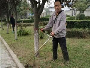 专业绿化修剪、养护、喷药