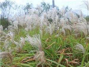 生�B�@啊――�F在的草原啊