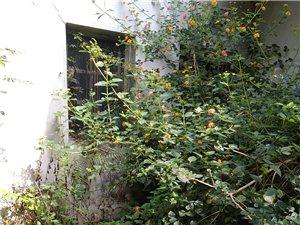 老家的房子长草了小鸟在安家了