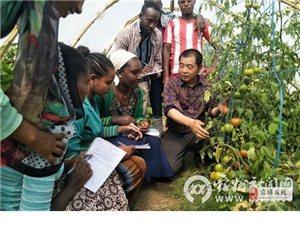 ��桥区农业农村局农业专家 长期赴非洲进行农业方面援助