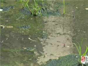 高州这个地方污水长流并发出阵阵恶臭,被电视台曝光了……