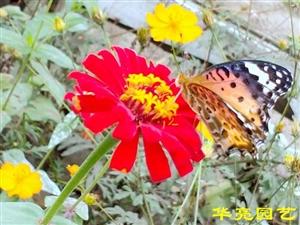 看雨涵�r�龅暮�蝶在忙碌,感�x每一���`�拥纳�命,感悟生命的�庀�