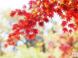 【绿野书院】秋日私语――文/王利红