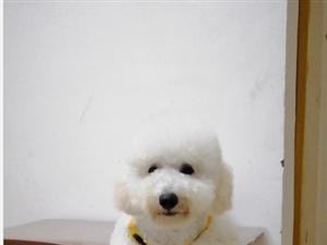 有���す罚�急急急!白色�辔操F�e犬