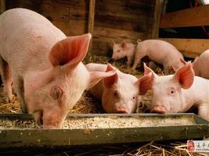 猪肉啥时候降价?别急,大手笔、10亿+!国家出手了!